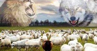 Nếu là bầy cừu, bạn sẽ chọn sói hay sư tử? Câu trả lời sẽ cho biết bạn sẽ lên lãnh đạo hay suốt đời làm nhân viên