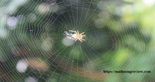Câu chuyện về cái mạng nhện
